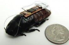 Remote controlled cockroach cyborgs