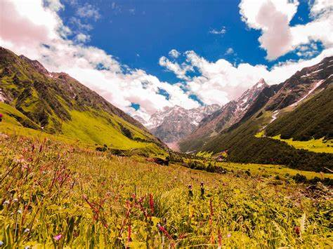 Valley of Flowers Trek, Uttrakhand